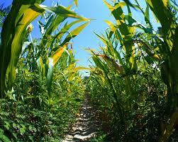 Corn ETF Trading
